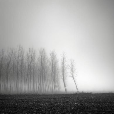 Works of / Tree Landscapes imagery by Pierre Pellegrini
