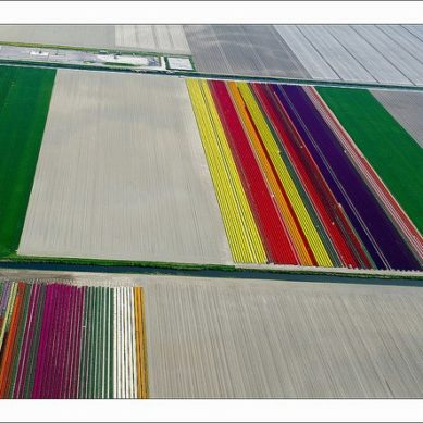 Works of / Tulip Fields by Normann Szkop